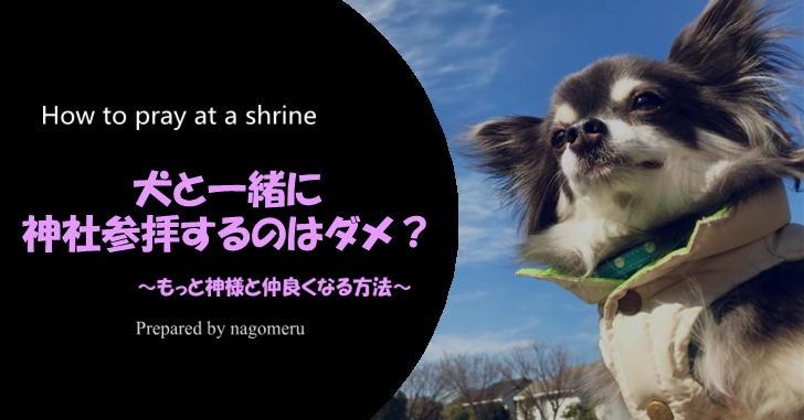 犬を連れての神社参拝したいけれどダメなの?理由が知りたい